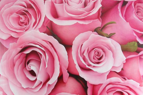 Розы — на сэндвич-панели